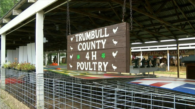 The Trumbull County Fair is the first to be affected by poultry showing ban_46556