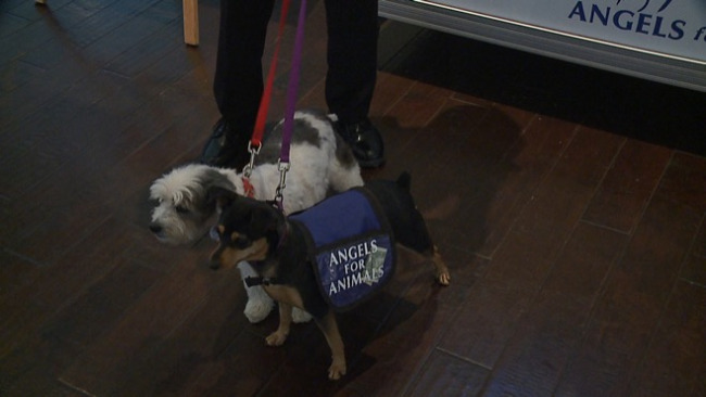 Angels for Animals celebrated 25 years in the Mahoning Valley Thursday night._48192