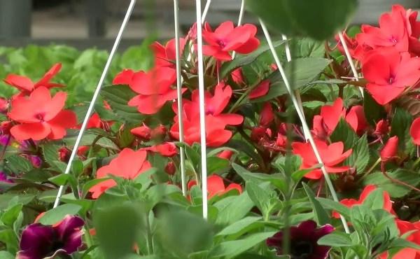 Spring planting_74175