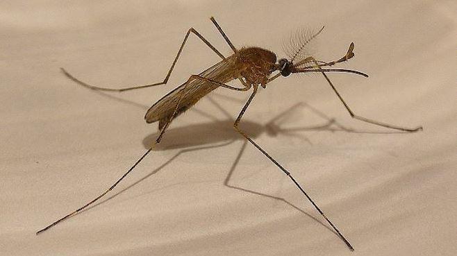 Mosquito_82919