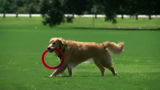 generic-dog_119809