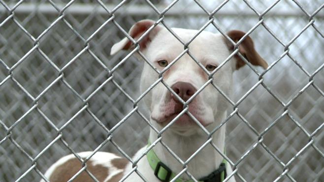 dog animal shelter generic_145966