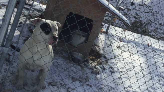 dog cold animal charity_148947