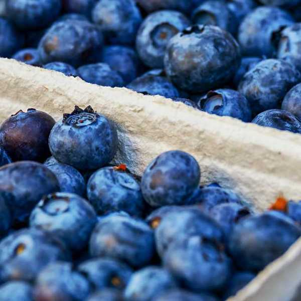 Blueberries, food, generic-873777806