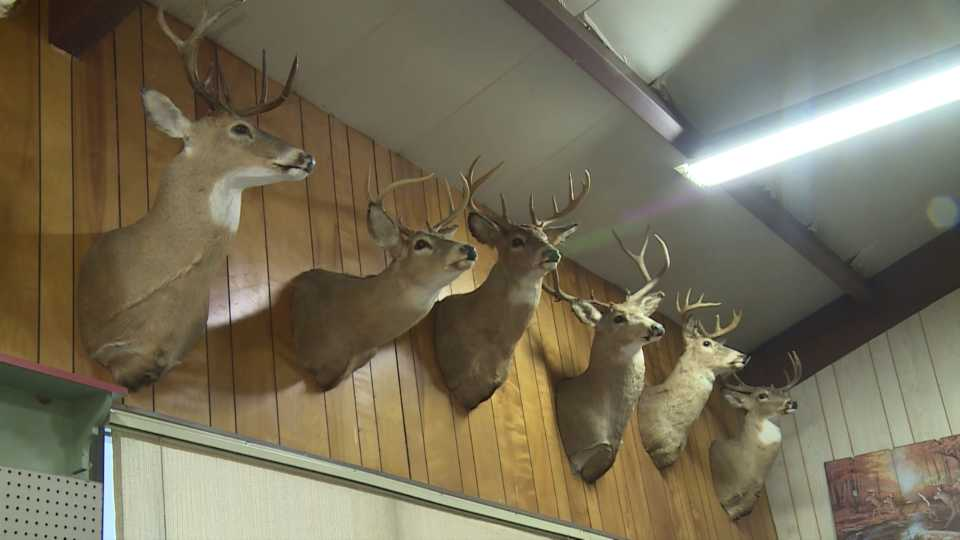 Bowhunting Gaining Popularity As Another Deer Hunting