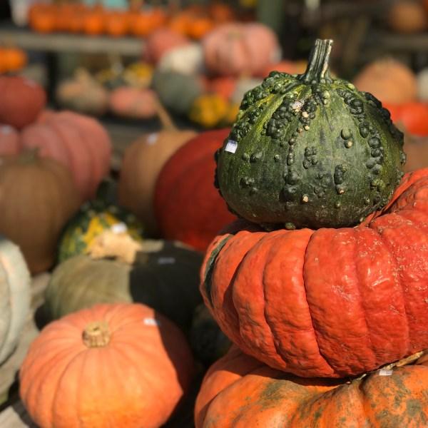 Colonial Gardens pumpkins