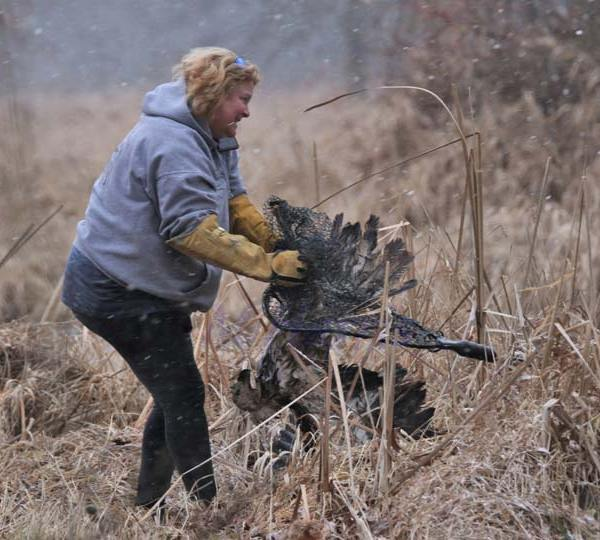 Bald Eagle Rescued at Mosquito Lake 4