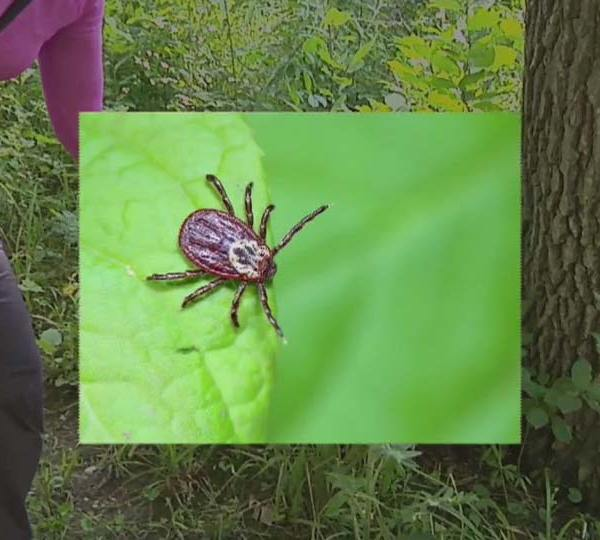 Len Rome's Local Health: Are you watching out for ticks?
