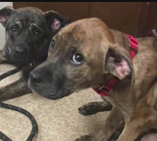 Animal Charity rescues two puppies